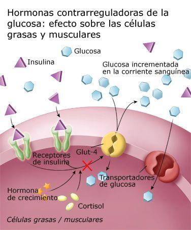 efectos sobre la diabetes tipo 1