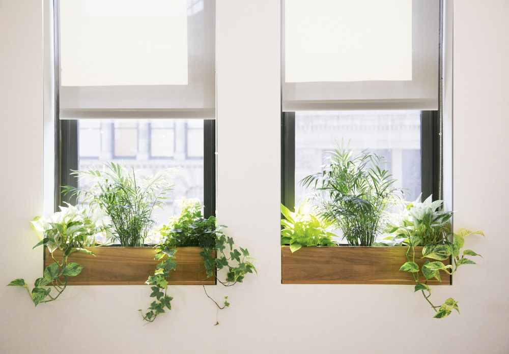 How To Choose The Best Office Plant For Your Work Space Best Office Plants Indoor Window Planter Window Plants