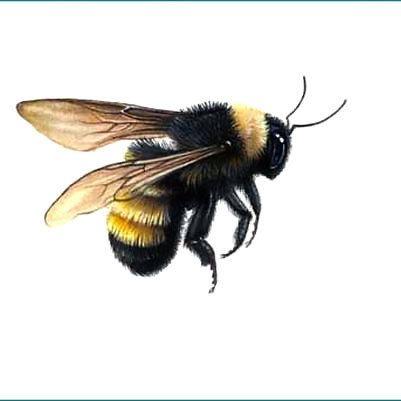 38b7b0e5b52e Flying Bumble Bee Tattoo Design - Stunning realistic flying bumble bee.