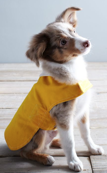 Adorable Dog Rain Jacket Http Rstyle Me N Qziw2pdpe Dog Coats Wolf Dog Dog Clothes
