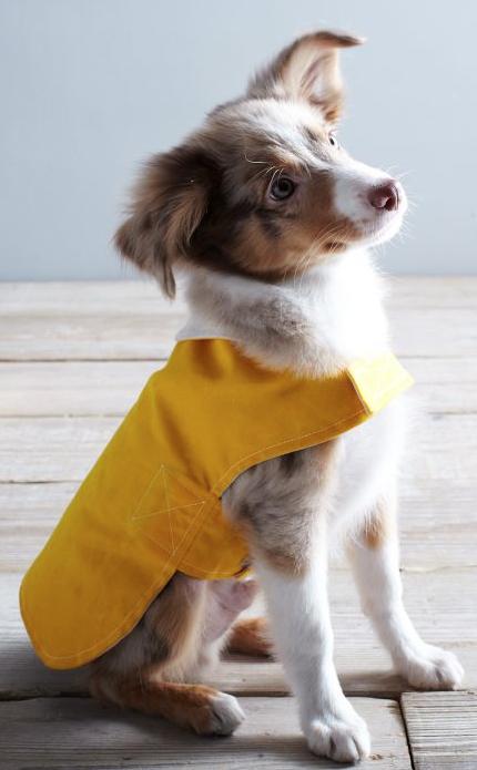 Adorable Dog Rain Jacket Http Rstyle Me N Qziw2pdpe Dog Coats Wolf Dog Dog Clothes