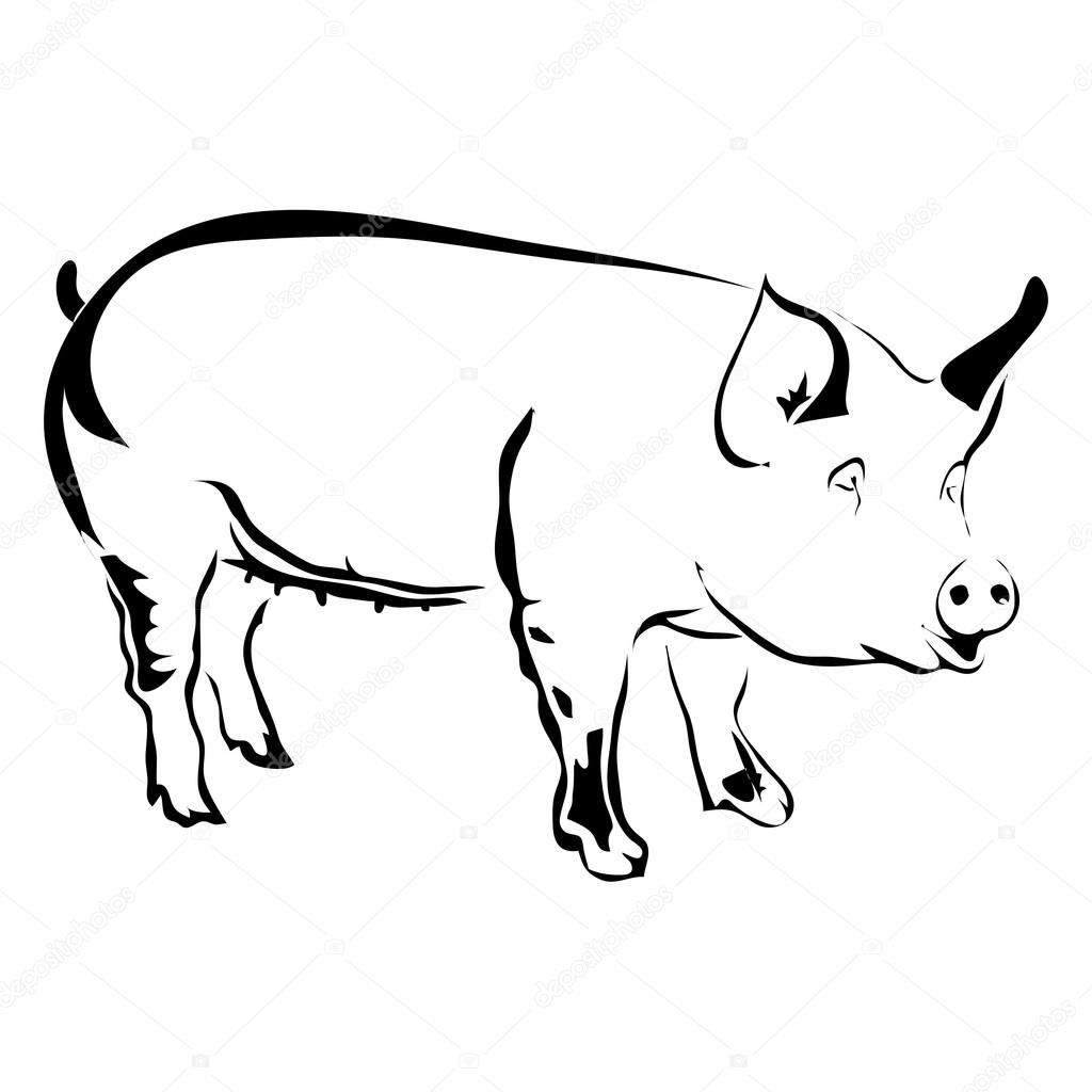 Outline Pig Vector Illustration Can Be Use For Logo Or Pig Vector Vector Illustration Illustration