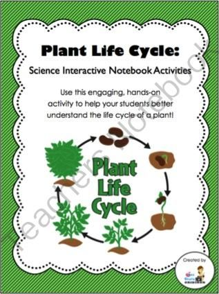 life cycle of a plant science interactive notebook activity from 3rd grade gridiron on. Black Bedroom Furniture Sets. Home Design Ideas
