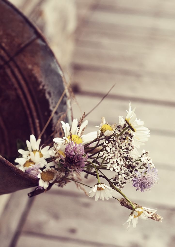simple flowers, love them...byKim King