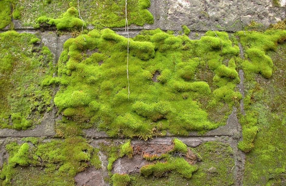 Eliminer La Mousse De La Terrasse Galipoli Fabrique Astuce Jardin Jardins Amenagement Paysager Devant Maison