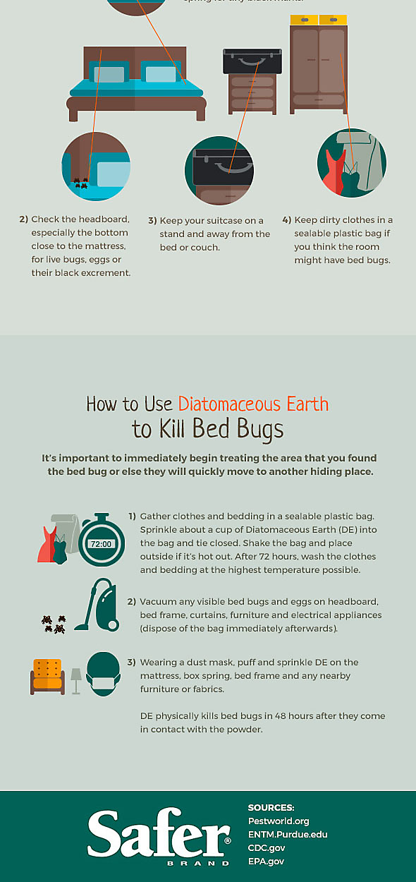 Bed Bug Lifecycle, Part 2 Bed bugs, Bugs, Bed