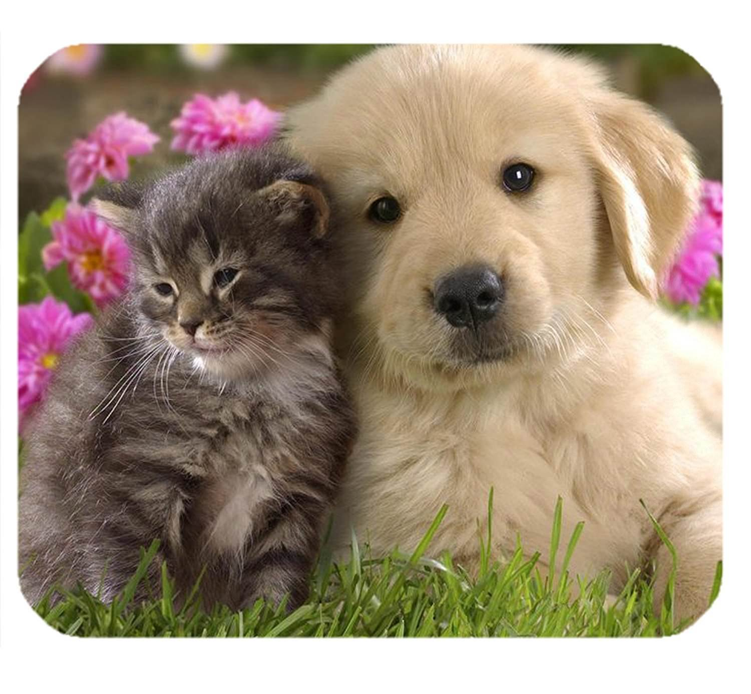 Mouse Mat 122 Mouse Pad Animals Cat Kitten Dog Golden Retriever Puppy Cute Cats And Dogs Cute Animal Videos Kittens Cutest