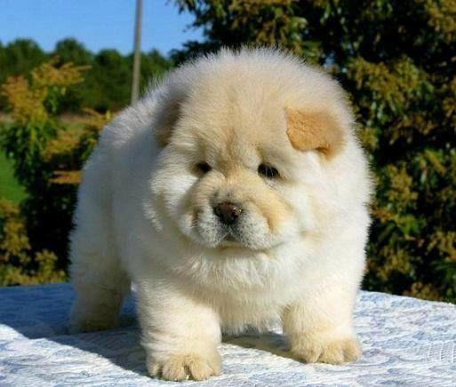 164931 604058819625316 507445315 N Jpg 513 436 Cute Animals