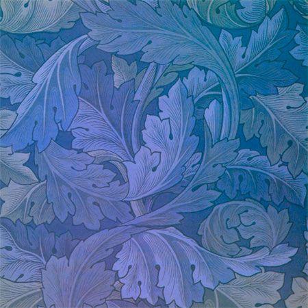 Blue Acanathus