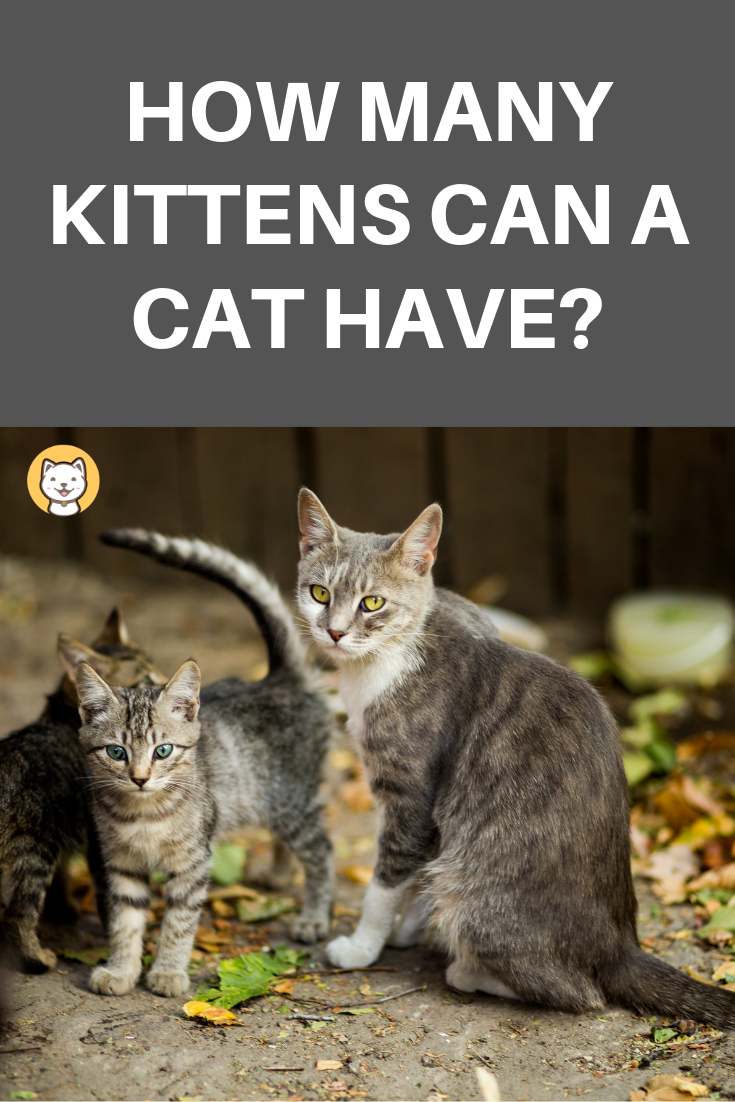 How Many Kittens Can A Cat Have? Feral cats, Pregnant