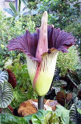 Top 20 Weirdest And Most Interesting Plants And Fungi In The World Unusual Flowers Plants Strange Flowers