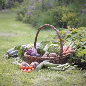 Vegetable Gardens in Florida thumbnail | Gardening ...
