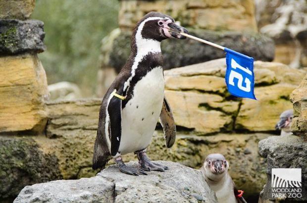 Woodland Park Zoo Seattle Aquarium Share Their Seahawks Pride Woodland Park Zoo Seattle Seahawks Football Seattle Aquarium