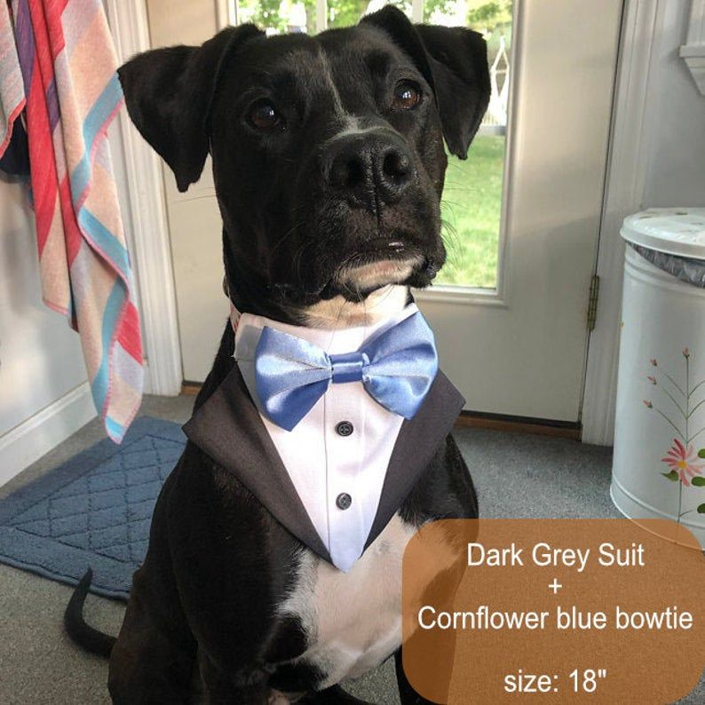 More Colors Available Dog Tuxedo Bandana Over The Collar Dog Bandana Dog Bib Dog Formal Attire Dog Bow Tie Dog Wedding Bowtie Shirt Dog Tuxedo Dog Collar Bandana Dog Bowtie