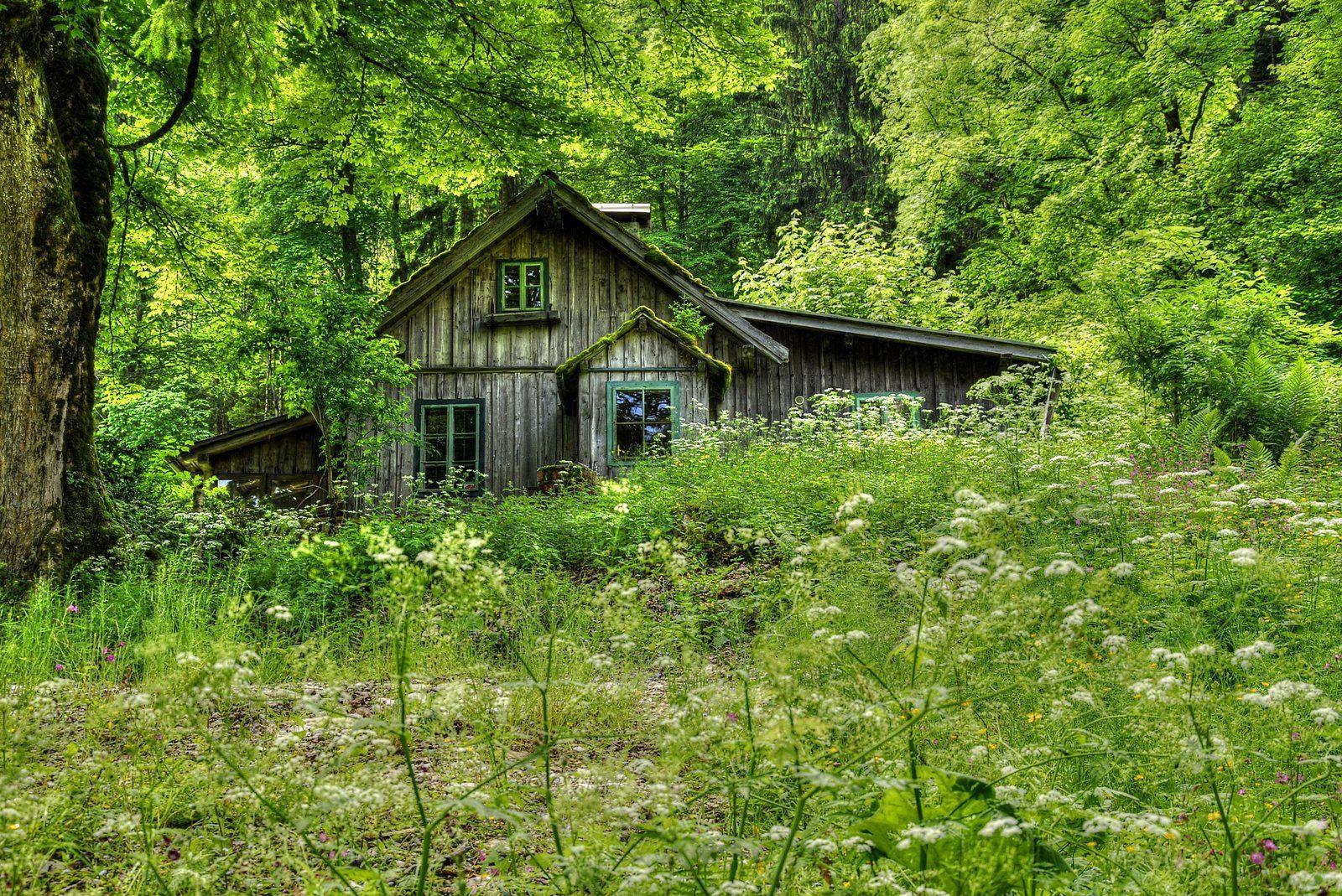 """Vaizdo rezultatas pagal užklausą """"forest old house"""""""