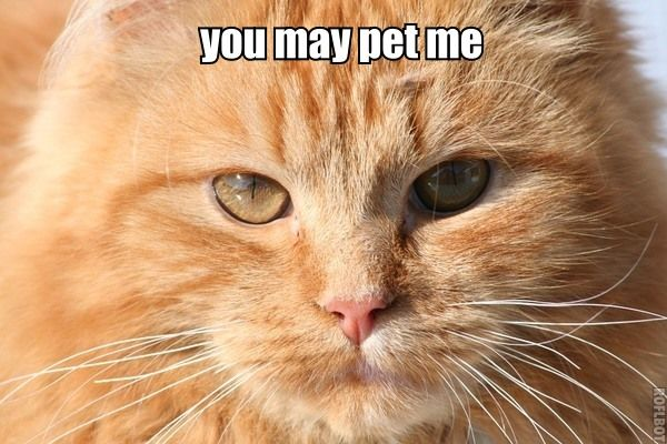 you may pet me...