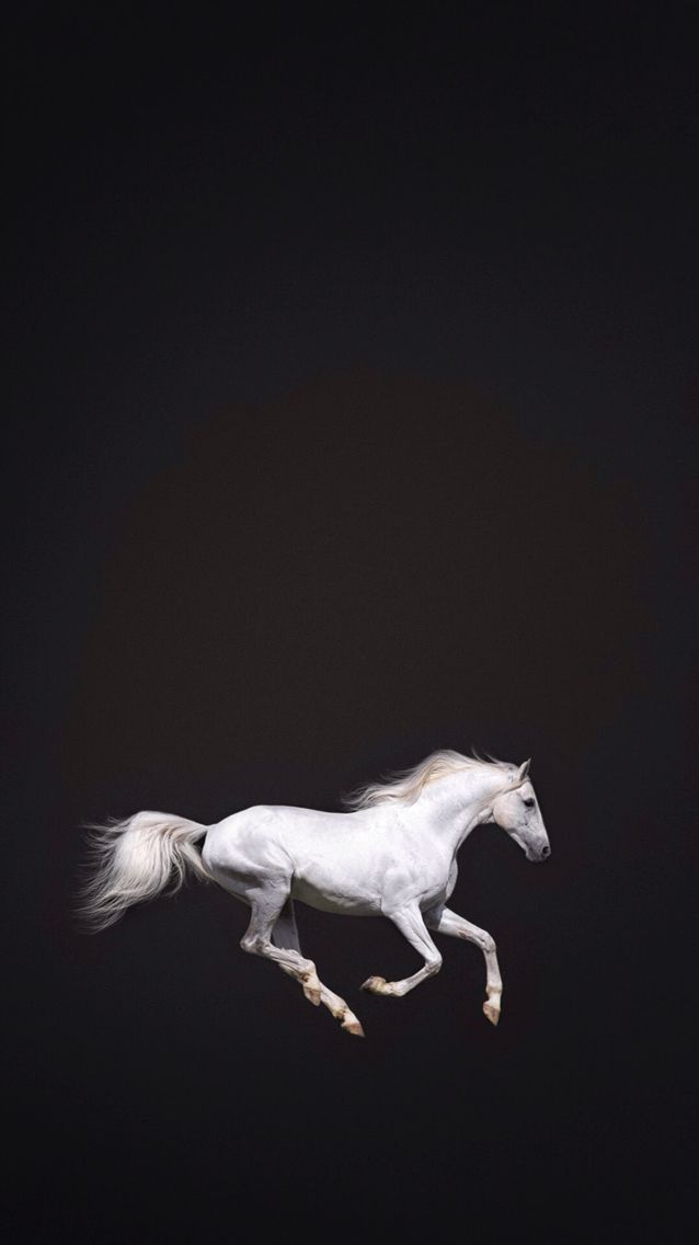 Iphone Wallpaper Photos De Chevaux Art De La Photographie Fond D Ecran Iphone Vintage