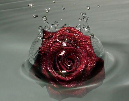 Water Rose Flowers Wallpaper Id 990237 Desktop Nexus Nature Beautiful Red Roses Blue Roses Wallpaper Rose Wallpaper
