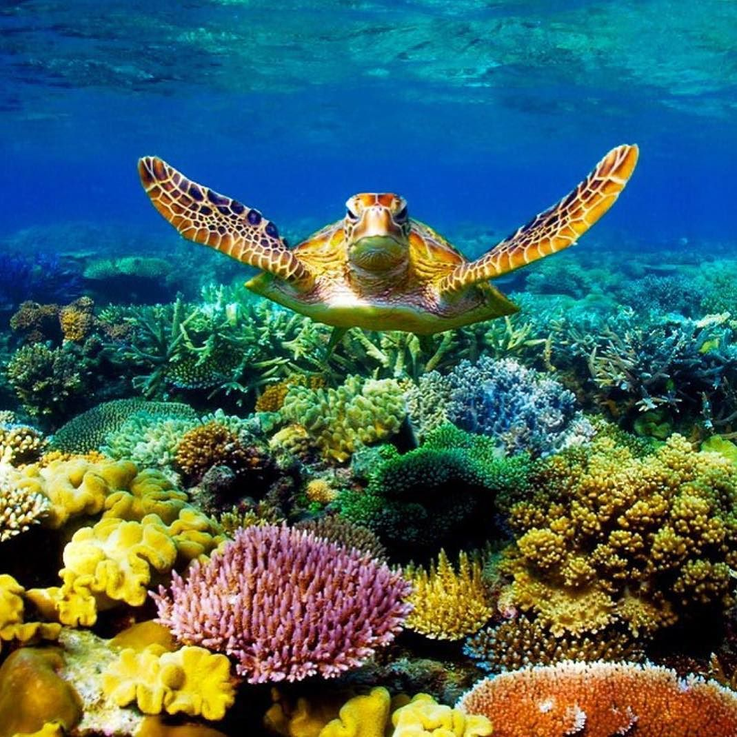 Great Barrier Reef Coral Reef In Queensland Australia The