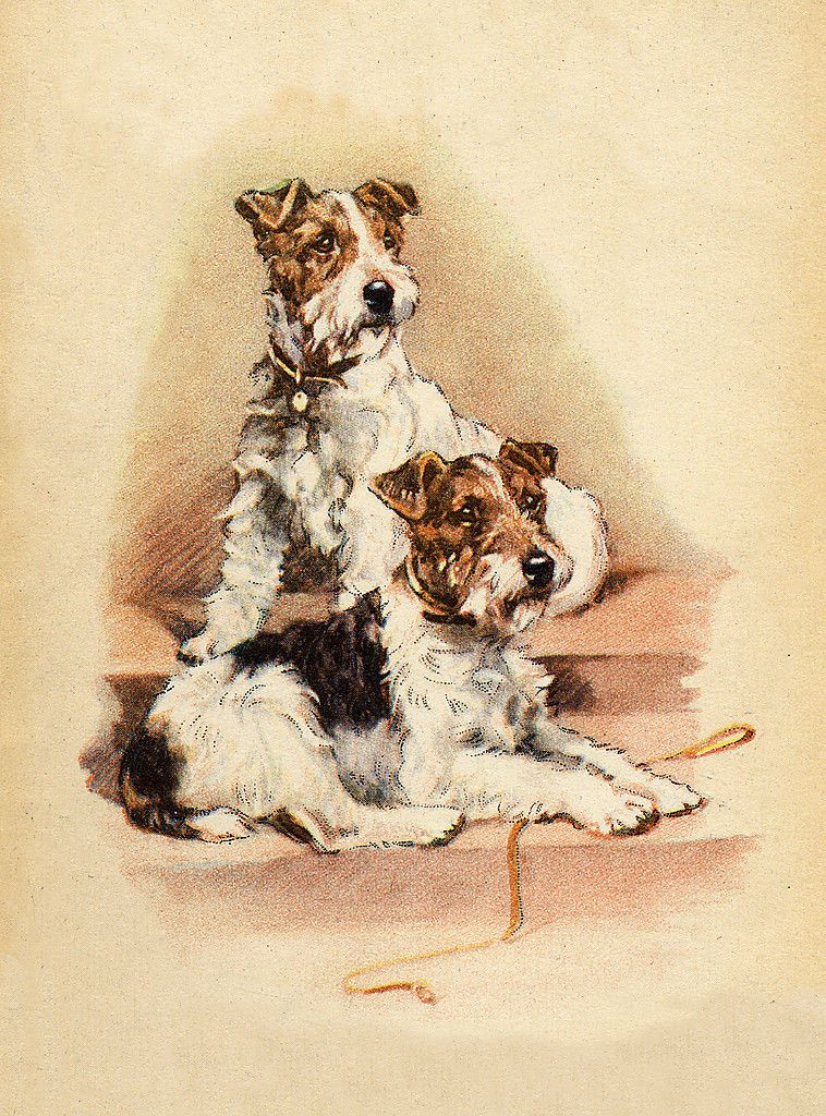 AIREDALE TERRIER CHARMING DOG GREETINGS NOTE CARD BEAUTIFUL DOG SITTING WITH MAN
