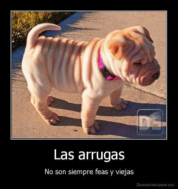 Fantastic Shar Pei Chubby Adorable Dog - 9bf7d37035003ef6decd710f327c07dc  Photograph_652972  .jpg