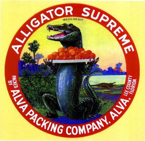 Fort Ft Pierce Florida Allapatahatchee Alligator Orange Fruit Crate Label Print