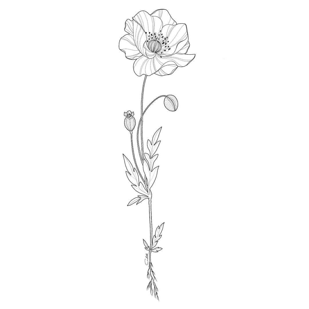 New Stuff Flower Ink Tattoo Blackartsupport Blackworkers Sketch Iblackwork Insta Blackwork Blackflashwork Blacksho Mohnblumen Tattoo Mohnblume Mohn