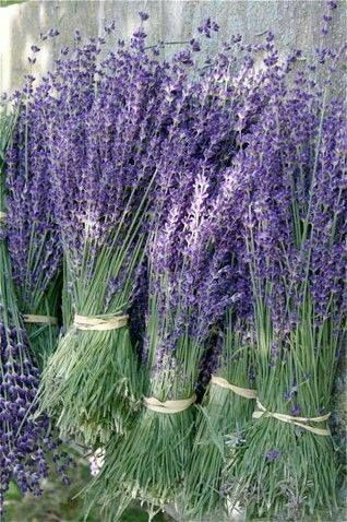 big bunches! #LavenderFields
