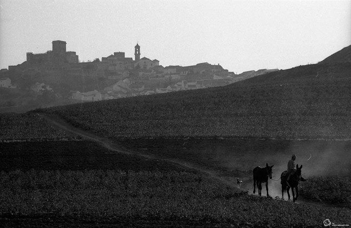 Paisaje del campo andaluz en 1963