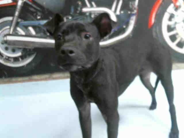 MARCI 1 Pet adoption center, Cat adoption, Dog adoption