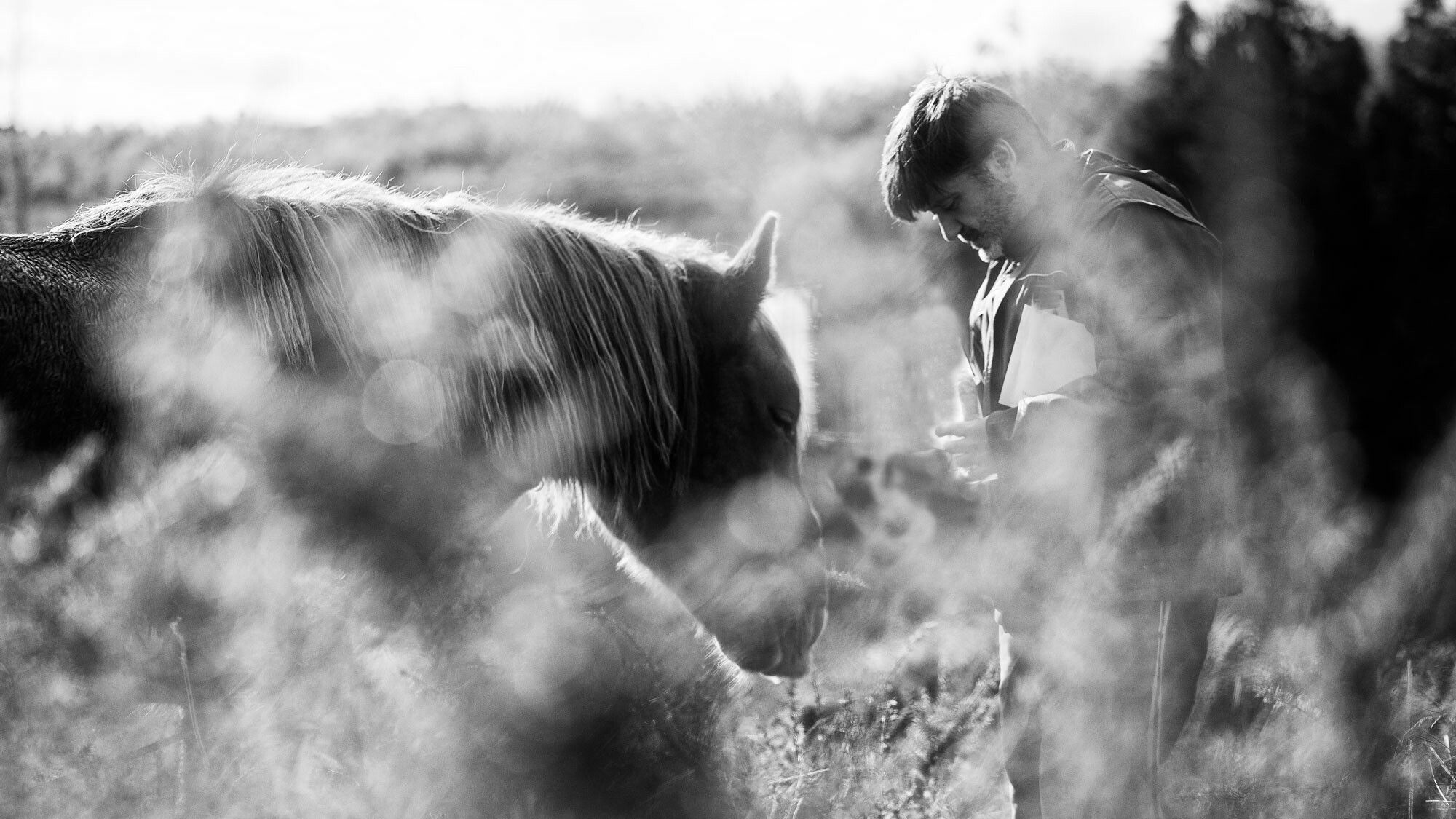 Hay momentos en los que para de llover y podemos disfrutar de lo que nos rodea. Contacta con nosotros en vpvweddings.com    #vpvweddings #vpv #lasnoviasdevpv #noviasvpv #coruña #videosdeboda #cinedebodas #videografosdeboda #videografosencoruña #igerscoruna #igersgalicia #galiciacalidade #gettingready #instagood #caballos #horse