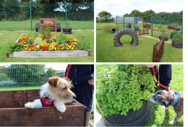 Enrichment For Dogs In Boarding Kennels