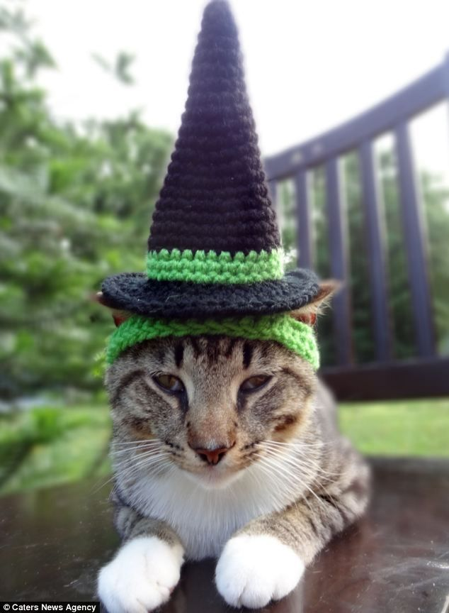Witch Cat Dog Costume - Witch Hat for Cats and Small Dogs - Custom Colors & Awww! A cat wears a Halloween inspired knitted hat made by an artist ...