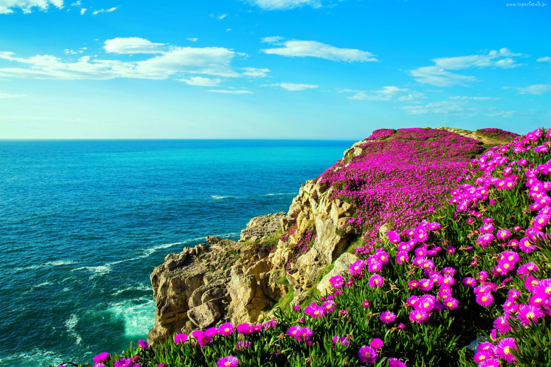 Wybrzeze Skaly Fioletowe Kwiaty Wiosna Bay Of Biscay Scenery Wallpaper Scenery