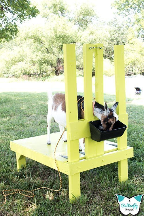 DIY Goat Milking Stand With Printable Plans