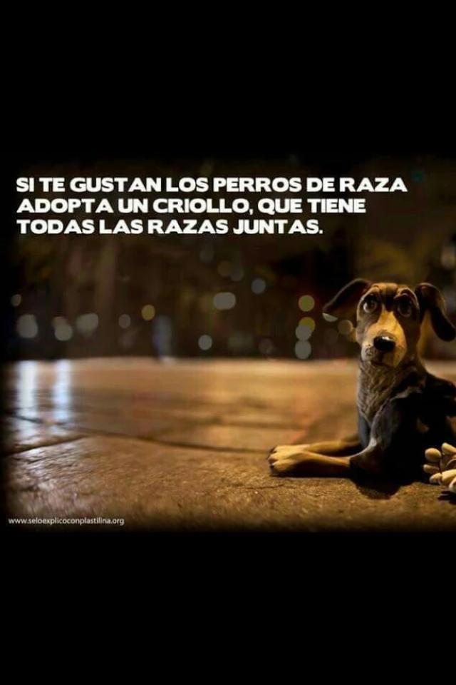 Adopta