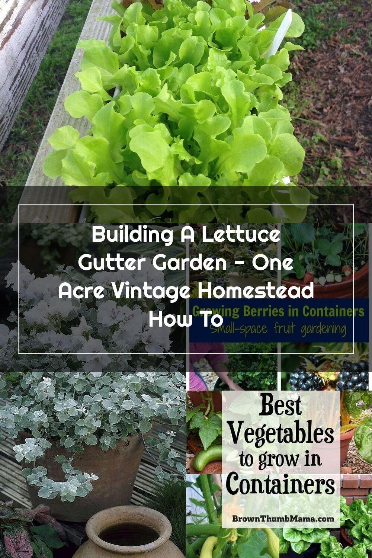 Building A Lettuce Gutter Garden One Acre Vintage Homestead How To In 2020 Gutter Garden Growing Vegetables Fruit Garden
