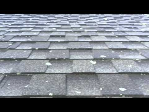 Roof Cleaning Lichen Removal From Asphalt Shingles – Lichen Removal From Roof Shingles