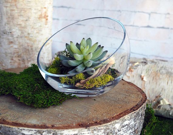 7 Asymmetrical Glass Terrarium With Faux Succulents In Either