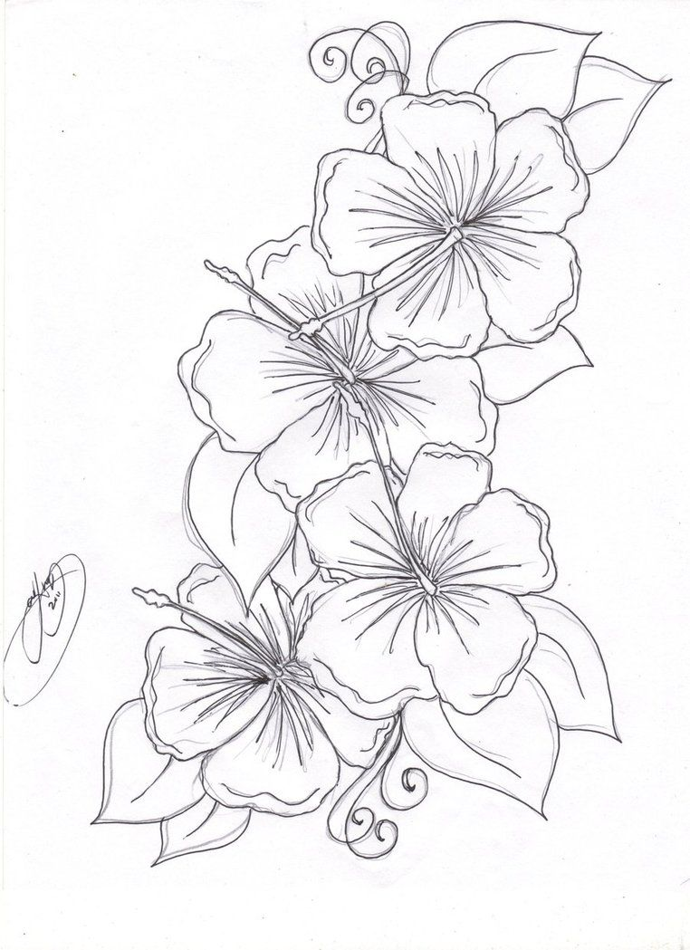 4 Flowers Hibiscus Flower Tattoos Flower Coloring Pages