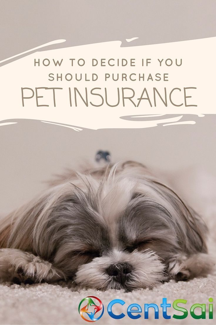 I Say Paws Before Buying Pet Insurance Training Your Puppy