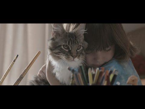 Whiskas Iris And Thula Curious Cat Dog Mixes Cats