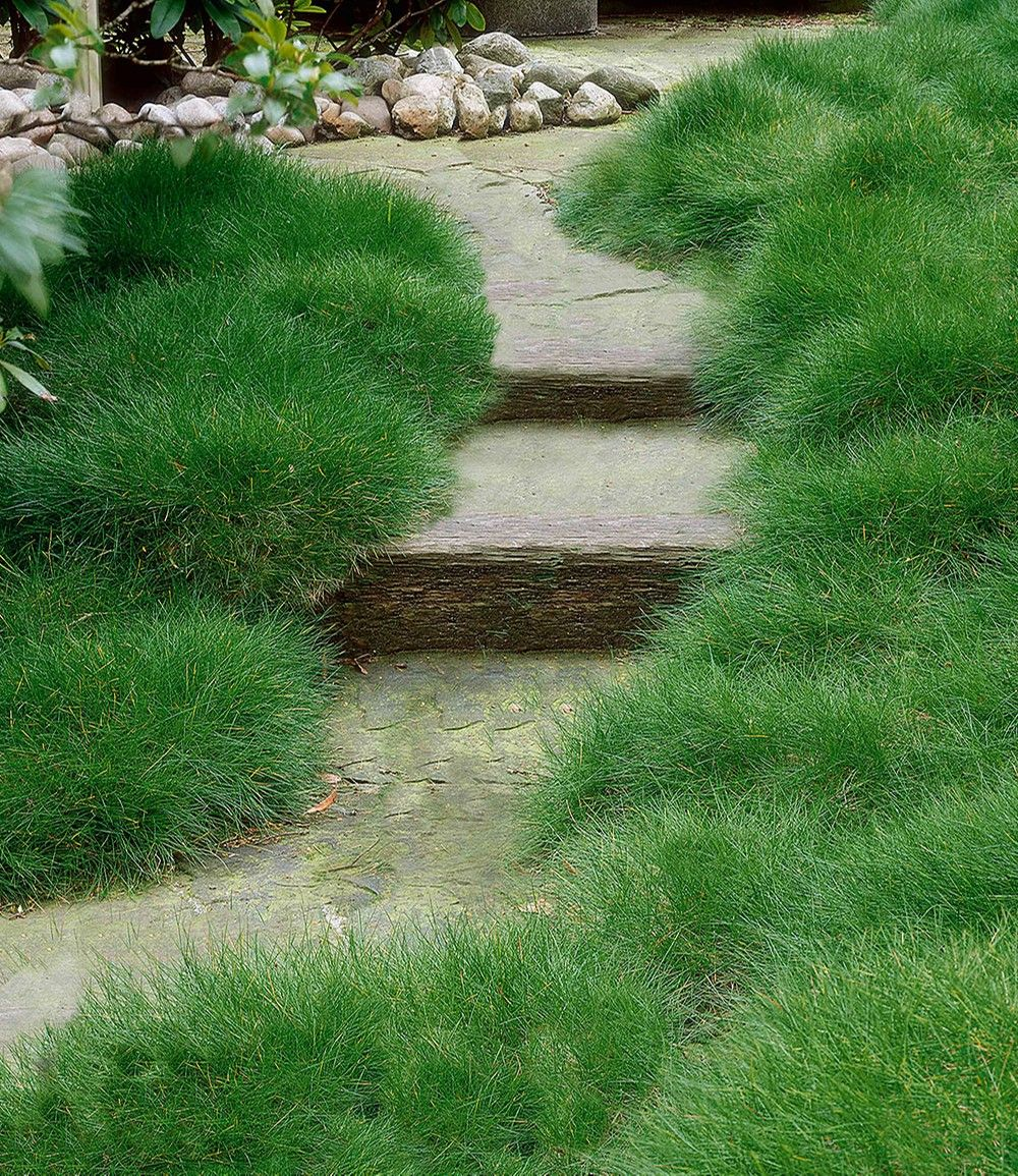 Https Www Baldur Garten Ch Produkt Ziergraeser 2175 Winterharte Stauden Winterharte Stauden A Z Ziergraeser Baerenfellgras Detail Ziergras Zierpflanzen Gras