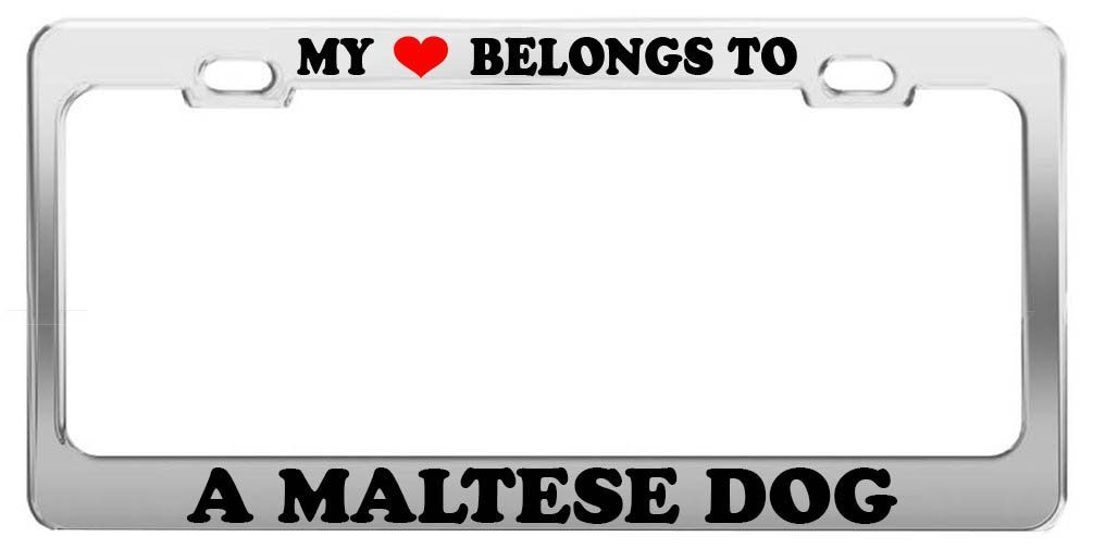 my heart belongs to a maltese dog license plate frame car truck accessory gift check - Dog License Plate Frames
