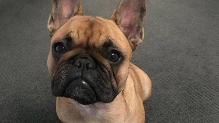 The Actor Matt Wilson Stolen Dog Found In Melbourne Mattwilson