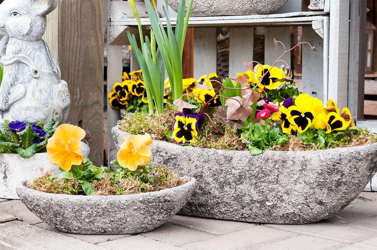 Wiosenne Kompozycje Z Bratkiem Plants