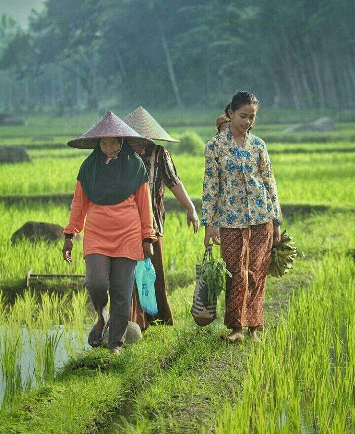 Melawati Pematang Sawah Belanja Untuk Persiapan Bagi Keluarga Hmmm Pag Yang Indah Kehidupan Pedesaan Hidup Petani