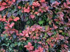 Barberry Shrub Care: Tips For Growing Barberry Bushes