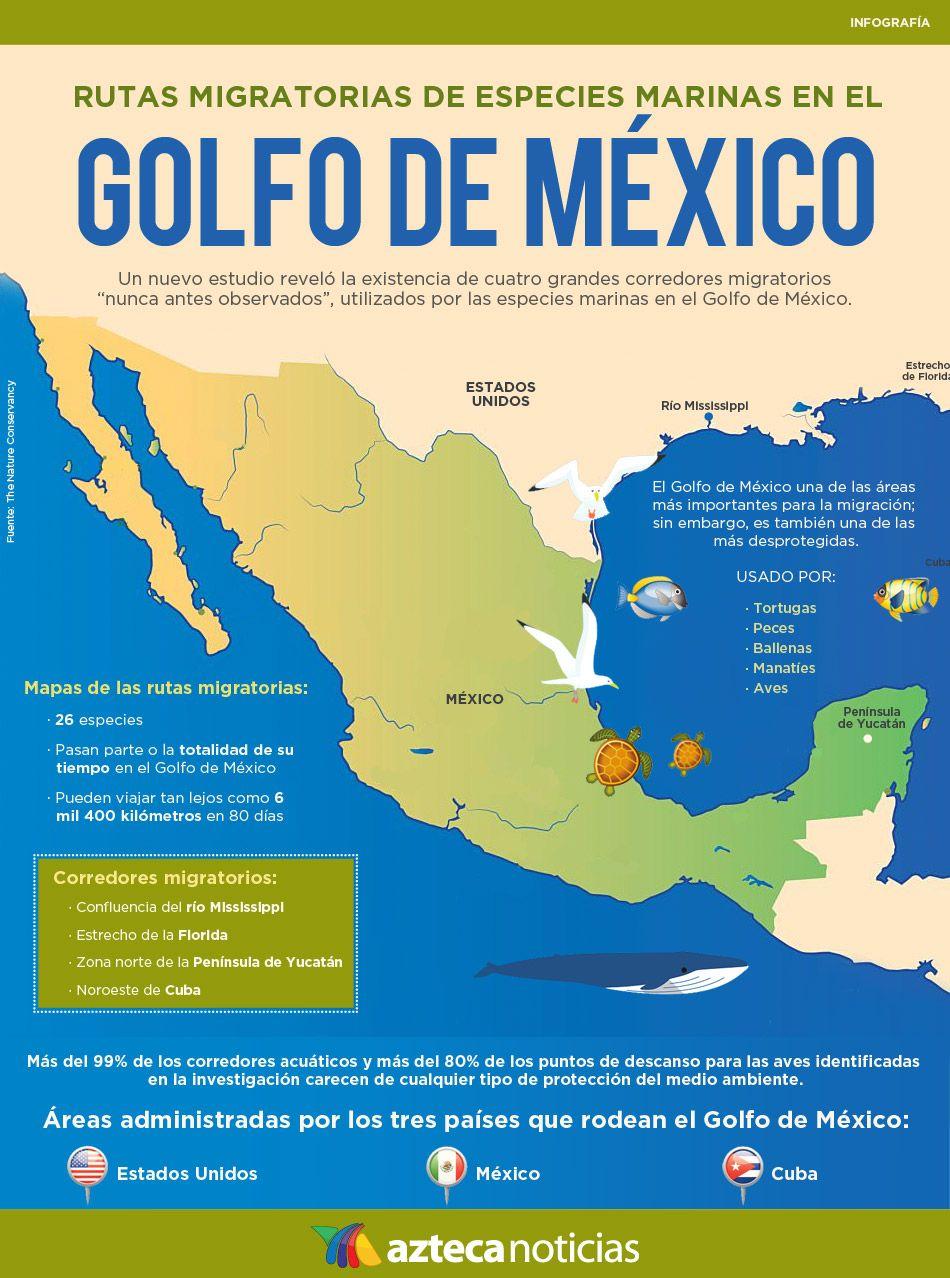 Rutas Migratorias De Especies Marinas En El Golfo De Mexico Infografia Expo Geo