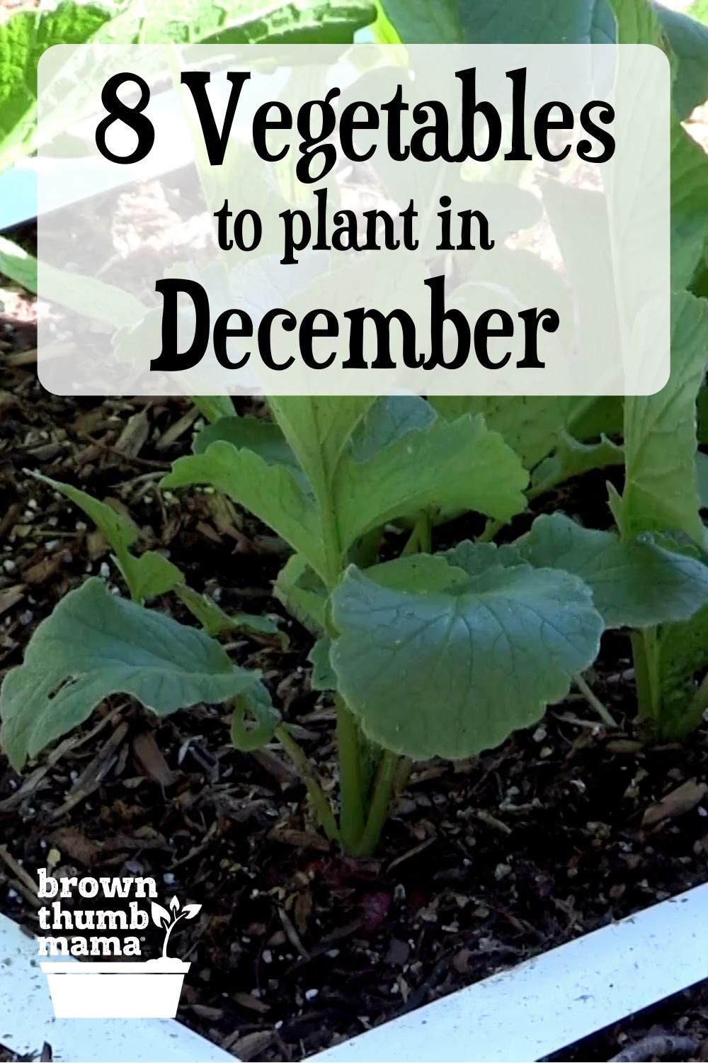 Photo of Plant these Vegetables in December!